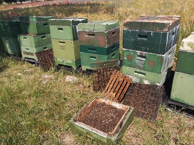 POL-NB: 1650EUR Schaden nach Sachbeschädigung an Bienenkästen nahe Bollewick
