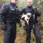 BPOL-KI: Bundespolizisten retten Mops von stark befahrener B 206 Höhe Bockhorn