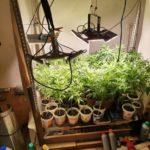 POL-HI: Cannabisplantage in Wohnung beschlagnahmt